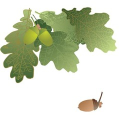 Oak leaves and acorns on transparent background vector