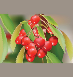 Red cherry branch with leaves vector