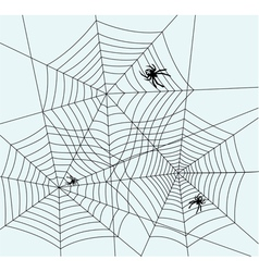 spiders and webs vector image