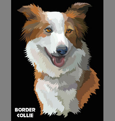 colorful border collie image vector image
