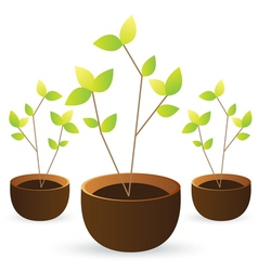 grow tree green leaves on white background vector image vector image