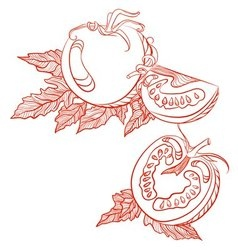 Monochrome drawing of tomatoes vector