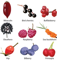 set of berries on a white background vector image vector image