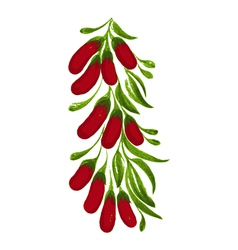Decorative ornament branch with red berries vector
