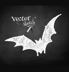 Chalkboard drawing of bat vector