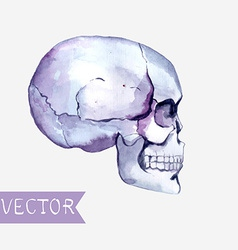 Watercolor flowers and skull background vector image