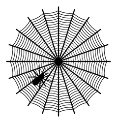 Spider on a web vector