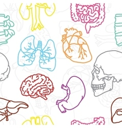 Human organs seamless pattern vector
