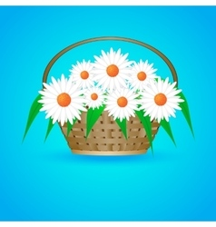 summer basket with daisies vector image vector image