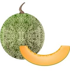 Cantaloupe vector