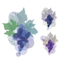 Black wine grape blue violet natural color grape vector