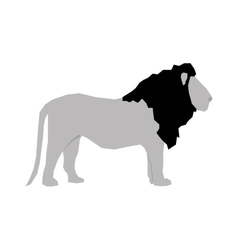 lion african animal vector image vector image