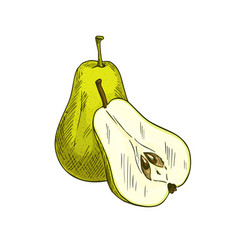 Pear fruits whole and sliced sketch icon vector