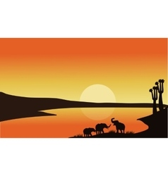 Elephant family of silhouette vector image vector image