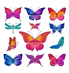 Butterflies graphic vector image