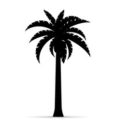 Palm tree silhouette 02 vector