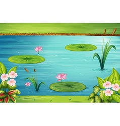 Scene with lotus in the pond vector image vector image