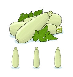 Zucchini Courgette Vegetable vector image vector image