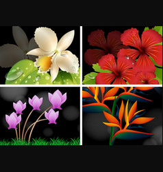 different types of flowers with black background vector image