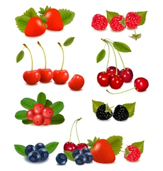Summer berries vector