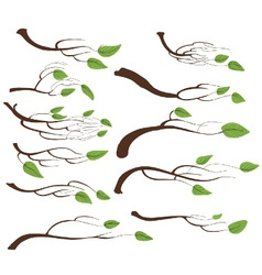 Tree branch and leaves set vector
