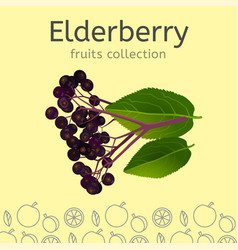 Fruits collection image vector