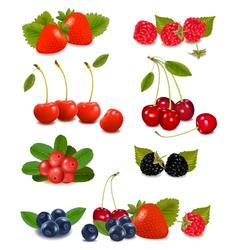 Summer berries vector