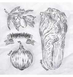 Vegetables onion napa cabbage olives vintage vector image