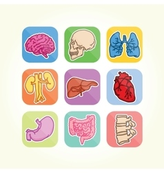 Human organs isolated icons vector
