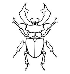 beetle deer horned beetle big insect line art vector image vector image