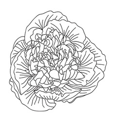 Floral decoration vector