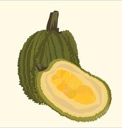 Jackfruit vector
