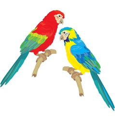 Blue yellow and red blue macaw parrots vector