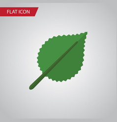 isolated alder flat icon linden element vector image vector image
