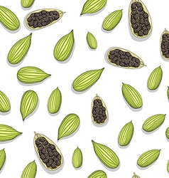 Seamless pattern with sketch cardamom painted vector