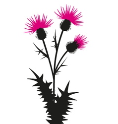 Thistle vector