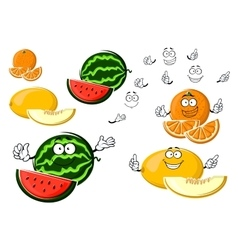 Ripe melon orange and watermelon fruits vector