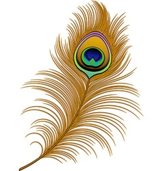 Peacock Feather vector image