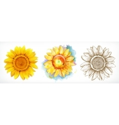 Sunflower different styles drawing icon vector
