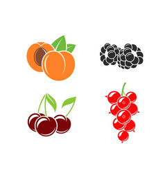 berries and fruit on white background vector image