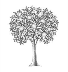 Fruit tree in engraving style vector