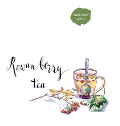 cup of rowanberry tea vector image