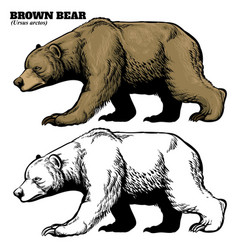 Hand drawing style of brown bear vector