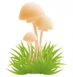 Mushrrooms vector