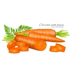 Carrots with leaves vector image