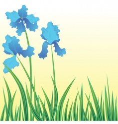 flowers iris vector image vector image