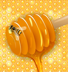 spoon with honey vector image
