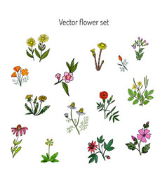 Flower set hand drawn botanical vector