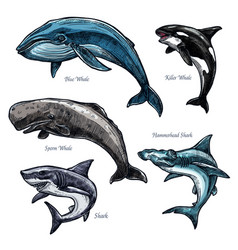 Giant sea animals whale and shark icons set vector