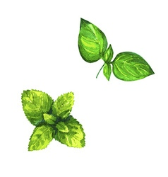 Set of realistic watercolor herbs on white vector image vector image